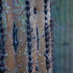 2014-Tucson-Cactus-Dreaming_IMG_3698