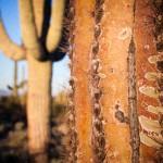 2014-Tucson-Cactus-Dreaming_IMG_3727
