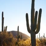 2014-Tucson-Cactus-Dreaming_IMG_3734