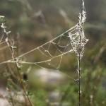 2014-Spider-WalkDSC_5887