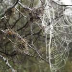 2014-Spider-WalkDSC_5889