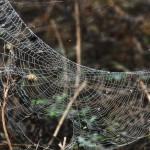 2014-Spider-WalkDSC_5917