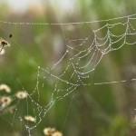 2014-Spider-WalkDSC_5936