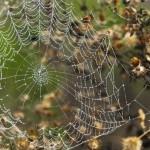 2014-Spider-WalkDSC_5942