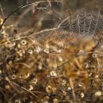 2014-Spider-WalkDSC_5943