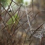 2014-Spider-WalkDSC_5952
