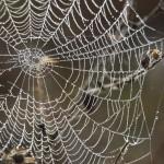 2014-Spider-WalkDSC_5956